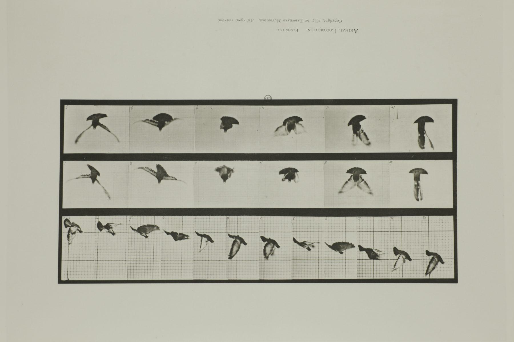Artist Eadweard Muybridge Palais Tokyo Paris Anne Imhof